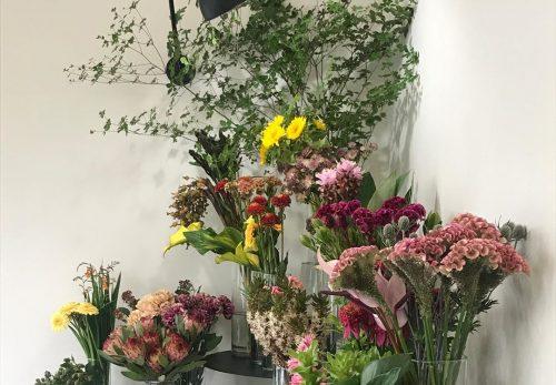 今日も色とりどりのお花たちと一緒にお待ちしています(2017.07.20)
