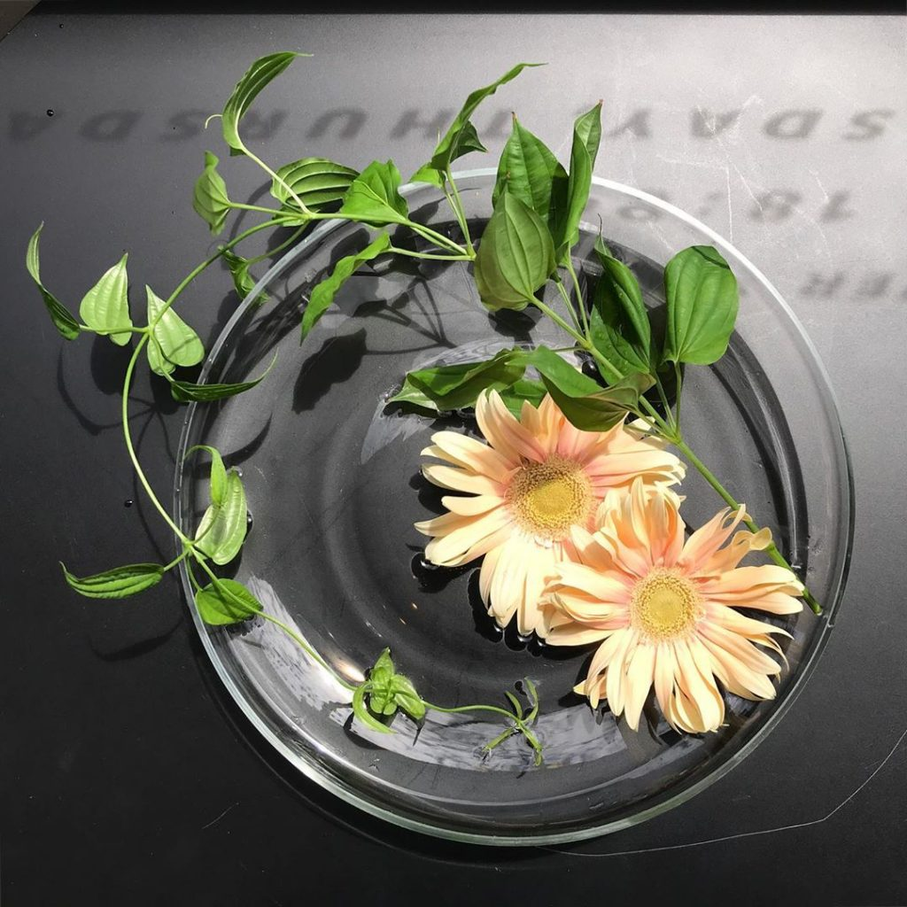 最後の瞬間まで美しいお花の変化をお楽しみください(2019.08.06)