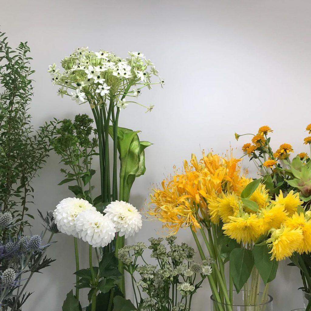 今日も色とりどりのお花たちと一緒にお待ちしています(2019.08.24)