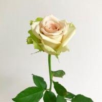 一輪でもいいので、お部屋にお花を飾ってみてください(2019.10.14)
