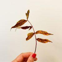 秋は落ちている葉っぱまで美しい(2019.10.19)