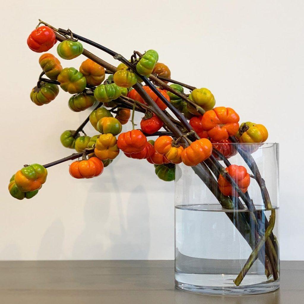 ソラナム(Solanum)(2019.10.27)