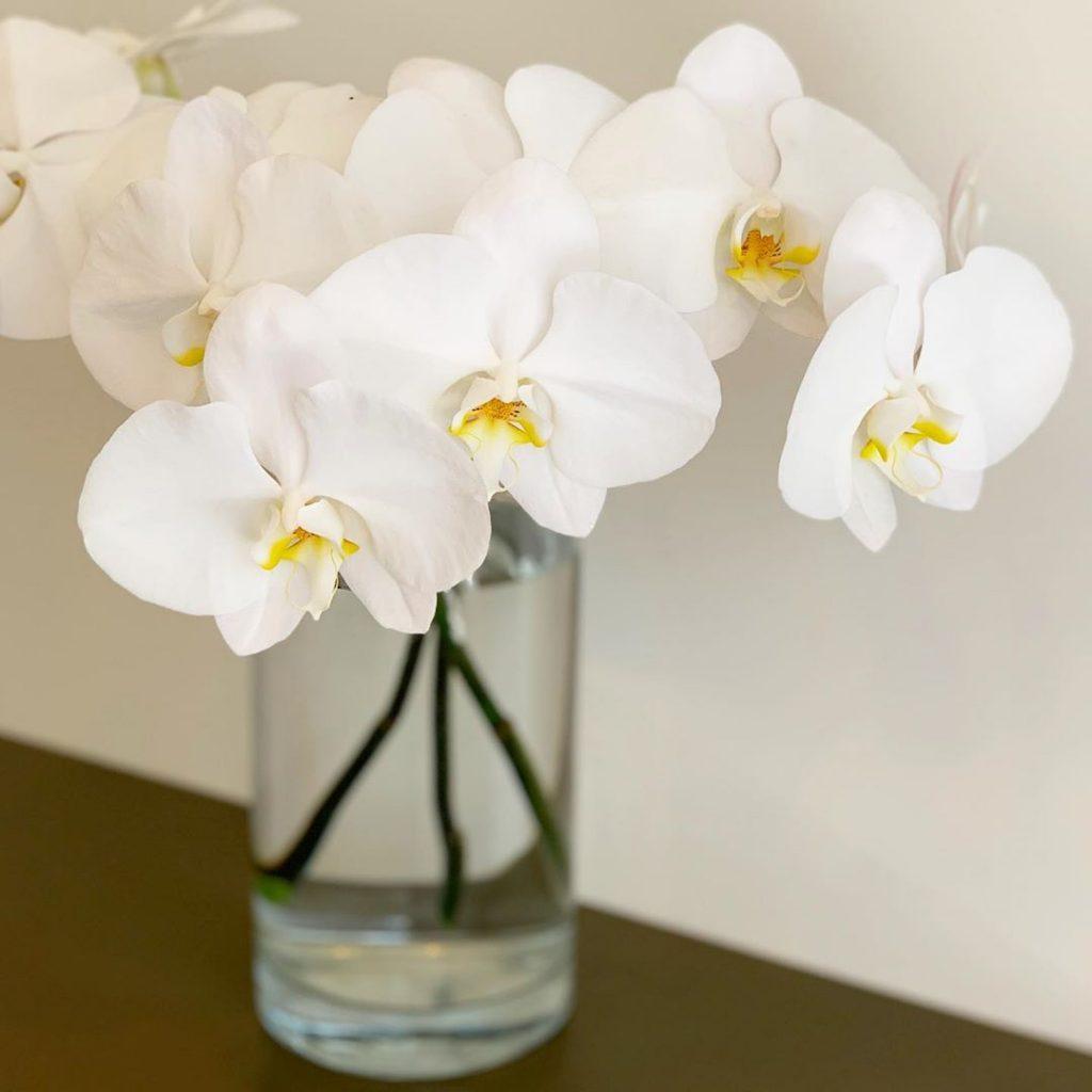 ファレノプシス(Phalaenopsis)(2019.11.04)