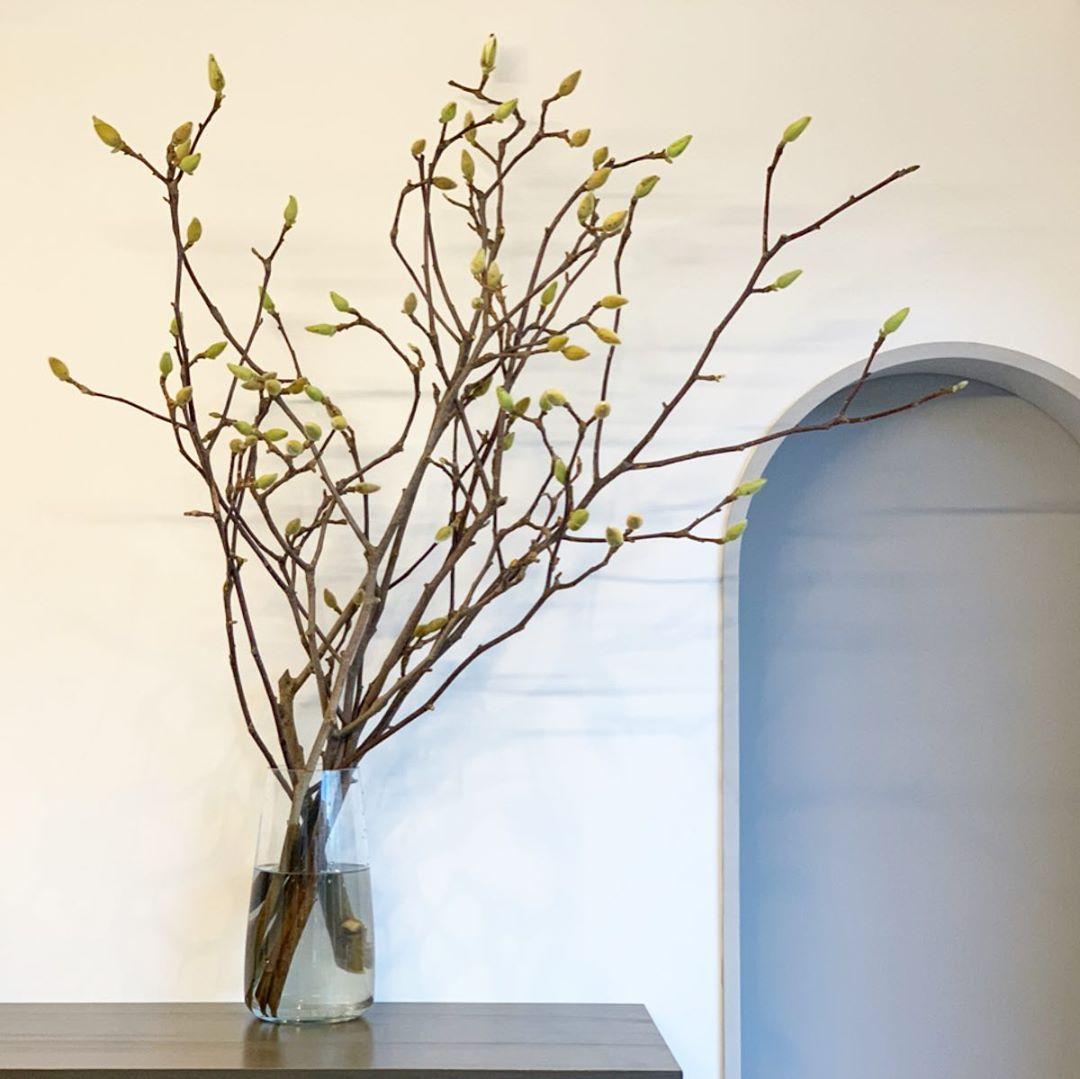ハクモクレン(Magnolia denudata)(2020.01.11)