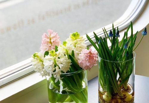 今日も色とりどりのお花たちと一緒にお待ちしています(2020.01.17)