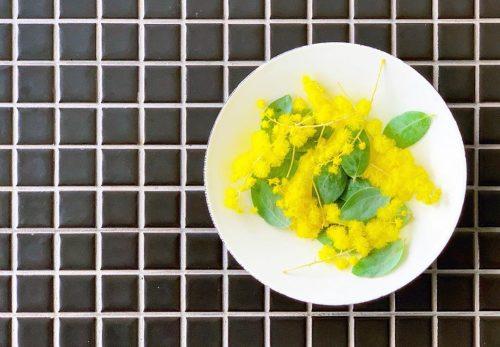 フワフワしたミモザの鮮やかな黄色(2020.01.26)