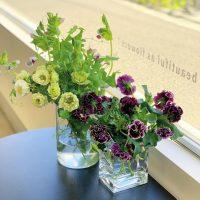 春が来るのは待ち遠しい、だけど春のお花たちには終わってほしくない・・・(2020.02.23)