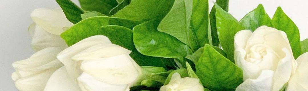 クチナシの甘い香り(2020.06.13)