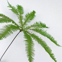 アンブレラファン(Umbrella fern)