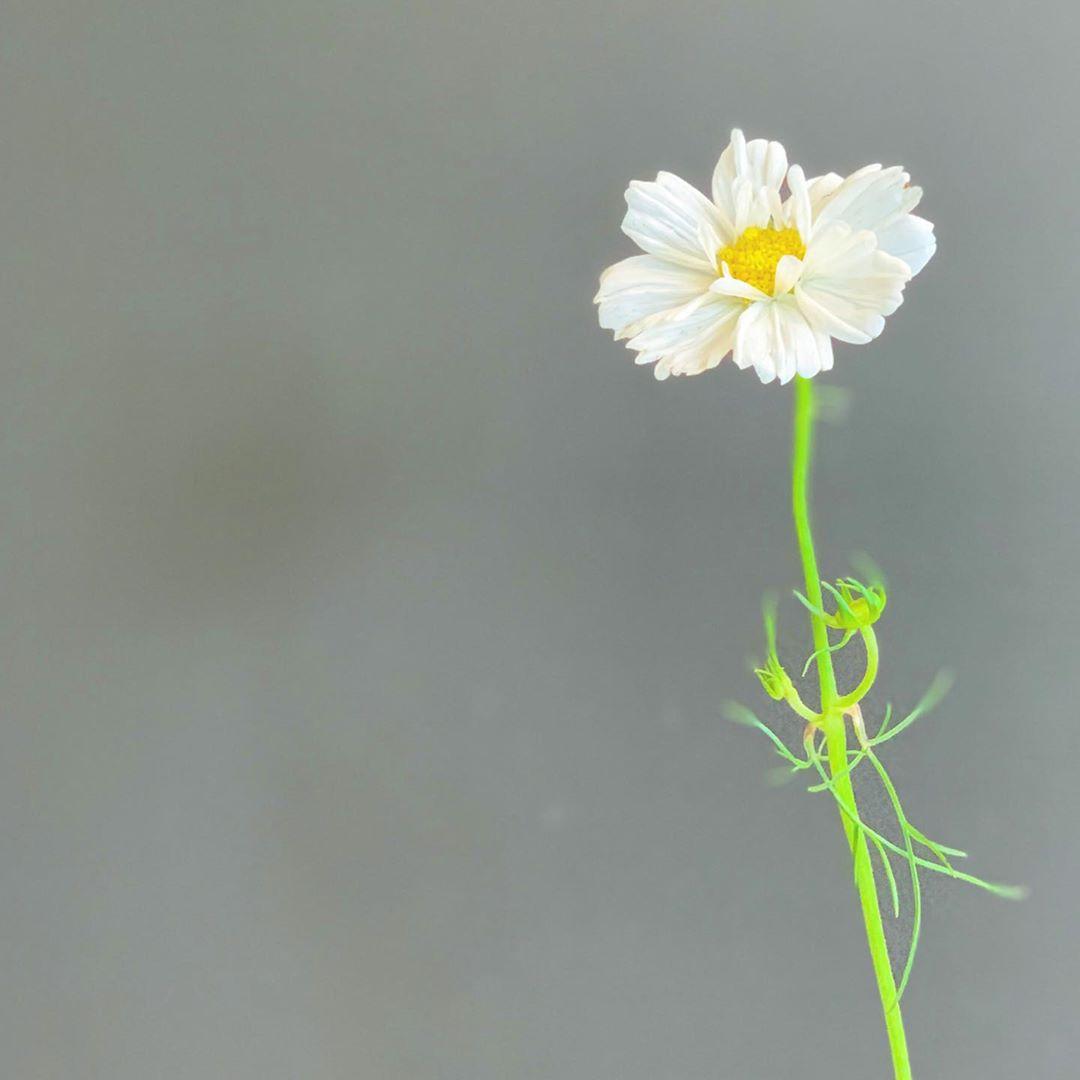 CHIC FLOWERSTAND