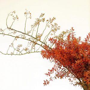 夜風が金木犀の薫りを運んできてくれると、秋の訪れを実感します(2020.10.05)