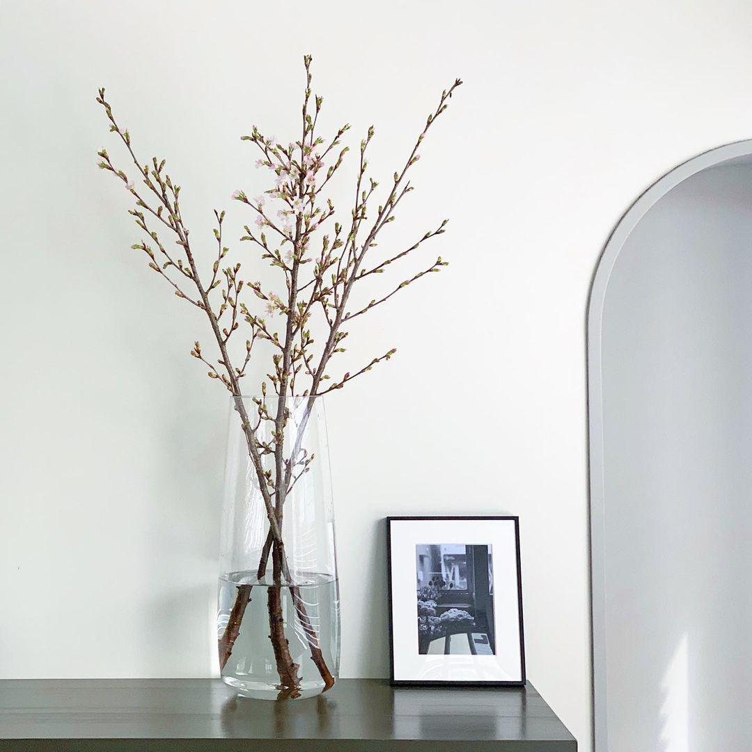 啓翁桜が綻んでいます(2021.03.22)