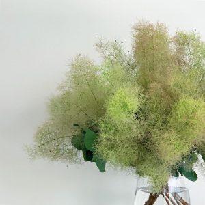 スモークツリーの季節がやってきました(2021.05.29)